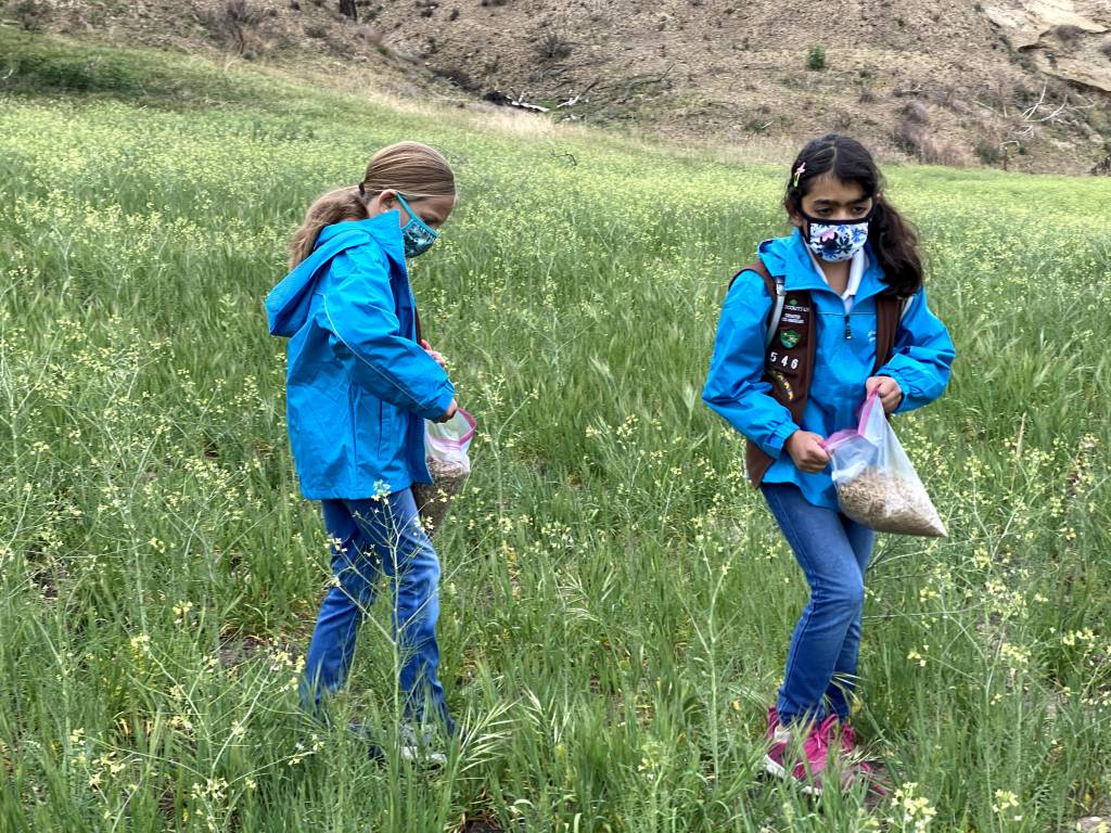 Girl Scouts Spread Wildflower Seeds